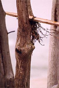 Holzstöcke am Wasser