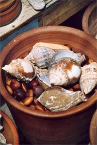 Muscheln in einem Tontopf